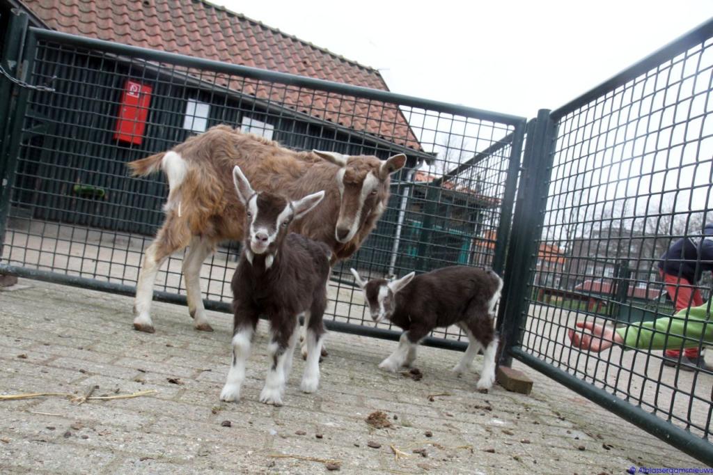 Kinderboerderij-de-plantage-Alblasserdam-Alblasserdamsnieuws-34