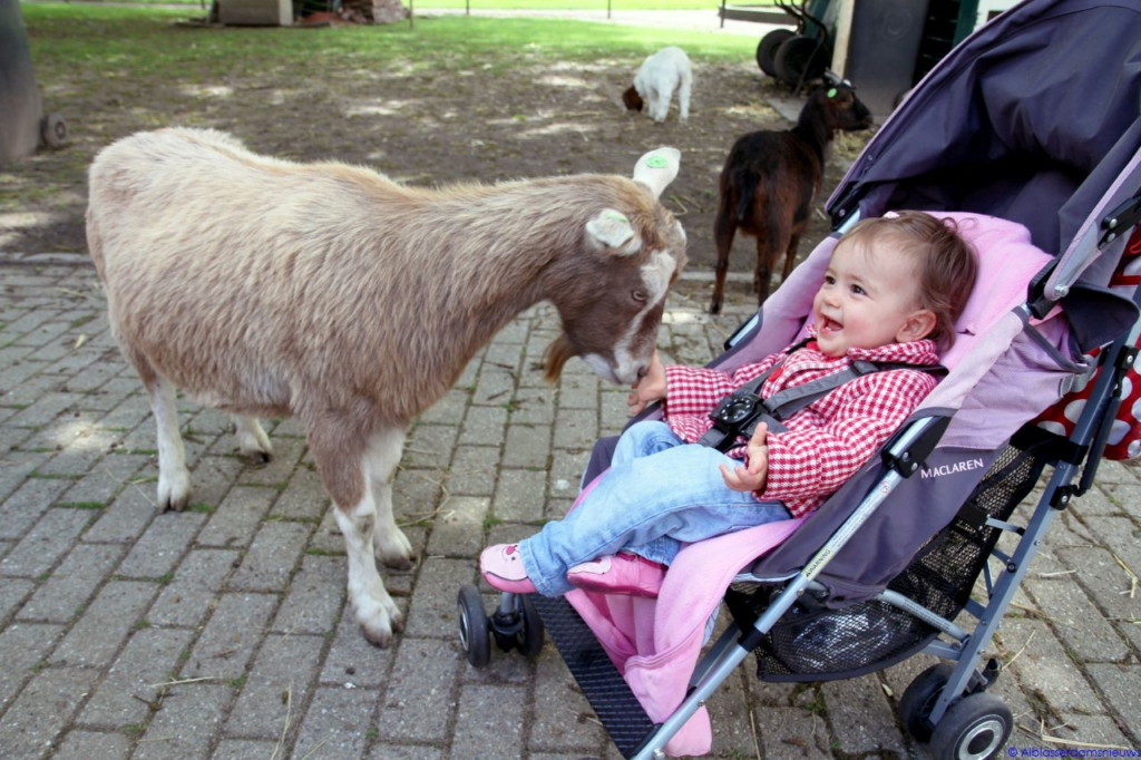 Kinderboerderij-de-plantage-Alblasserdam-Alblasserdamsnieuws-60